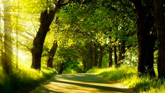 Rotogal, nuestro compromiso ecológico